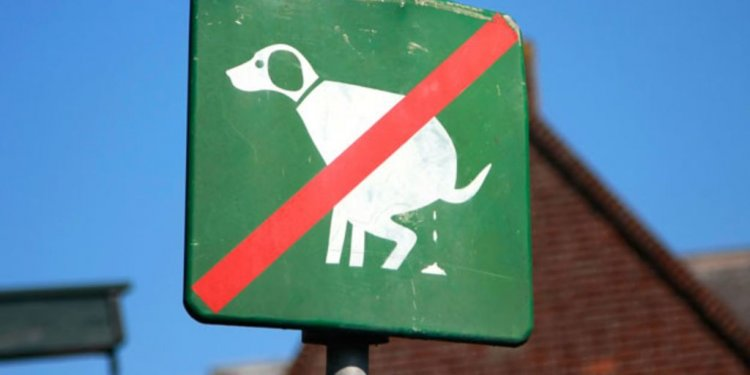 Eight radical solutions to the problem of dog mess - BBC News