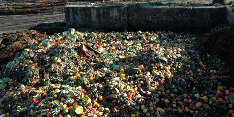 Food Waste Crackdown | Green Initiatives