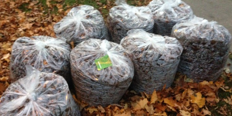 Halifax homeowners getting rejection stickers on leaf bags - Nova