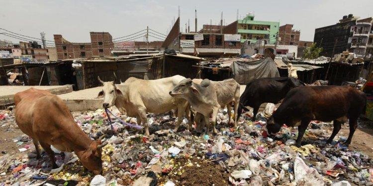 Noida chairman to meet authority staff over sanitation, traffic